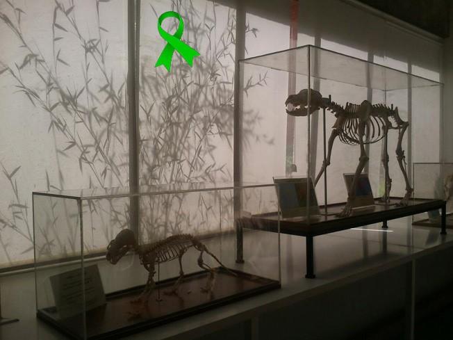 Conoce el Museo de Anatomía Comparada de Vertebrados en Museo de ...